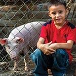 gc-fy16_pigs_150x150